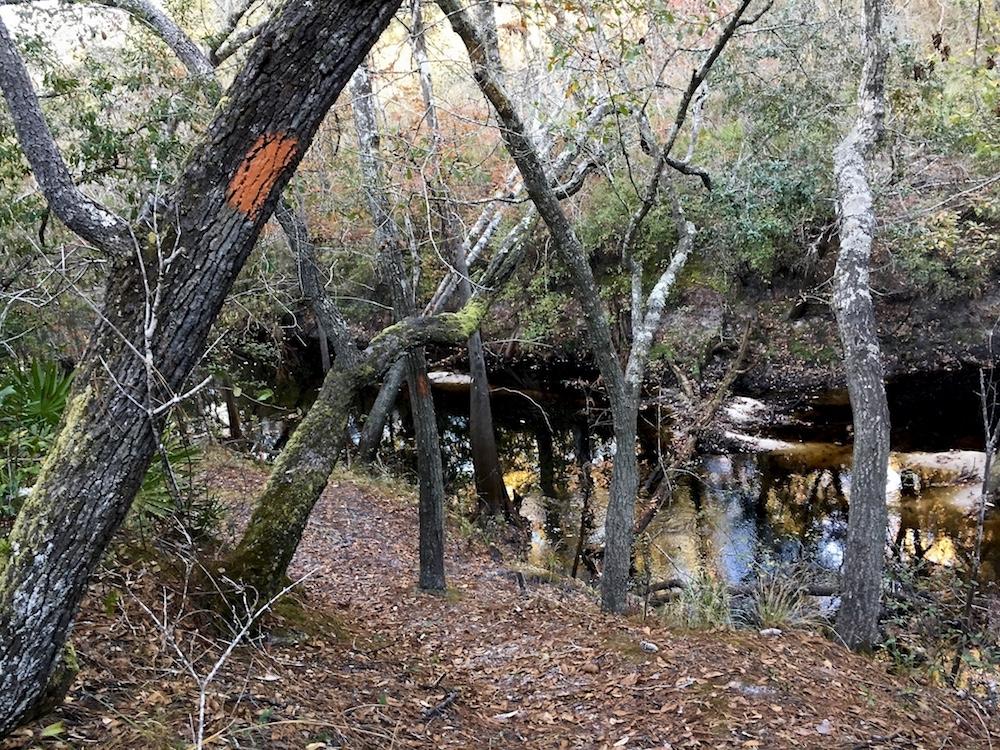 Orange-blazed hiking trail through forest near river near St. Marks, Florida
