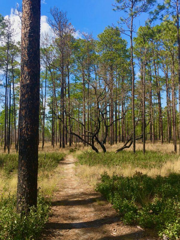 Florida National Scenic Trail 18
