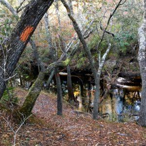 Florida National Scenic Trail 31