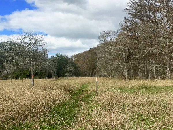 Florida National Scenic Trail 9