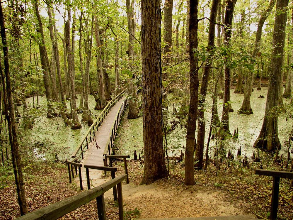 Boardwalk leading through swamp along Natchez Trace.