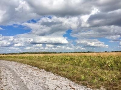 Sandy park road next to open Florida prairie land.