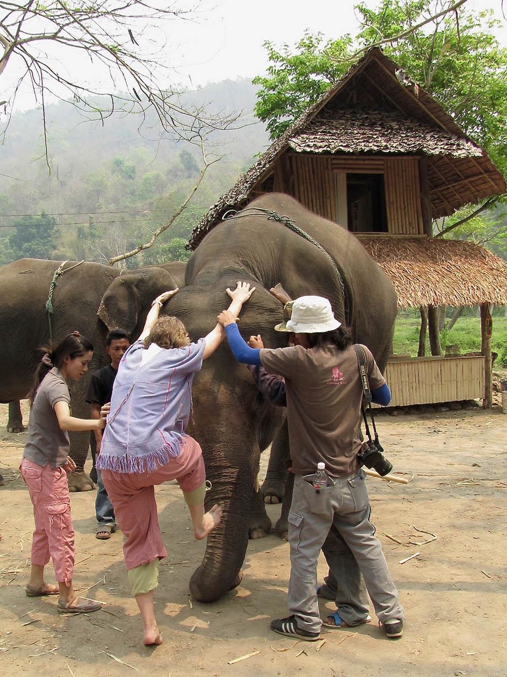 elephant-farm-large
