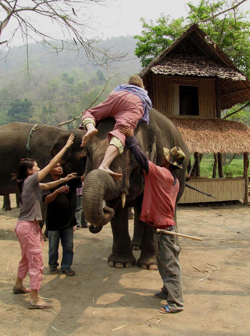 elephant-farm-ride