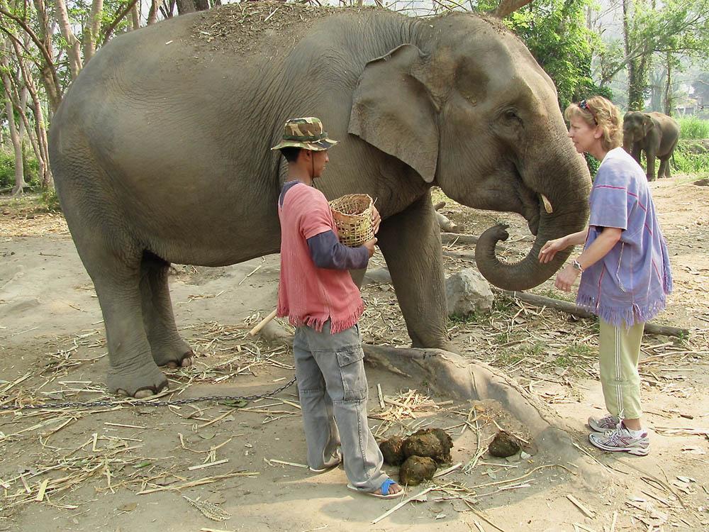 elephant-farm-straw