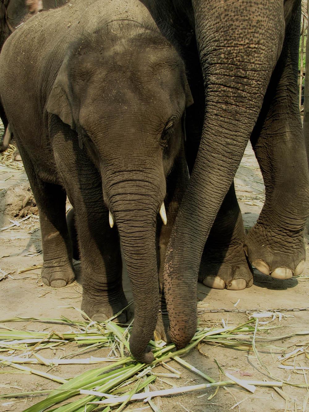 elephant-farm-together
