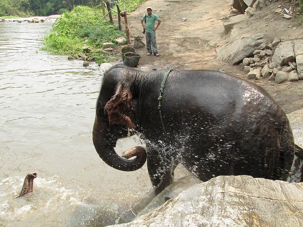 elephant-farm-water
