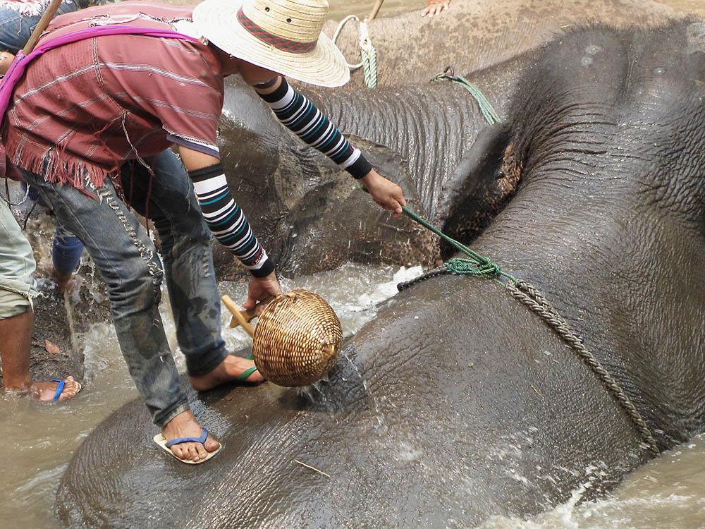 elephant-farm-waters