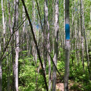 Superior Hiking Trail 16