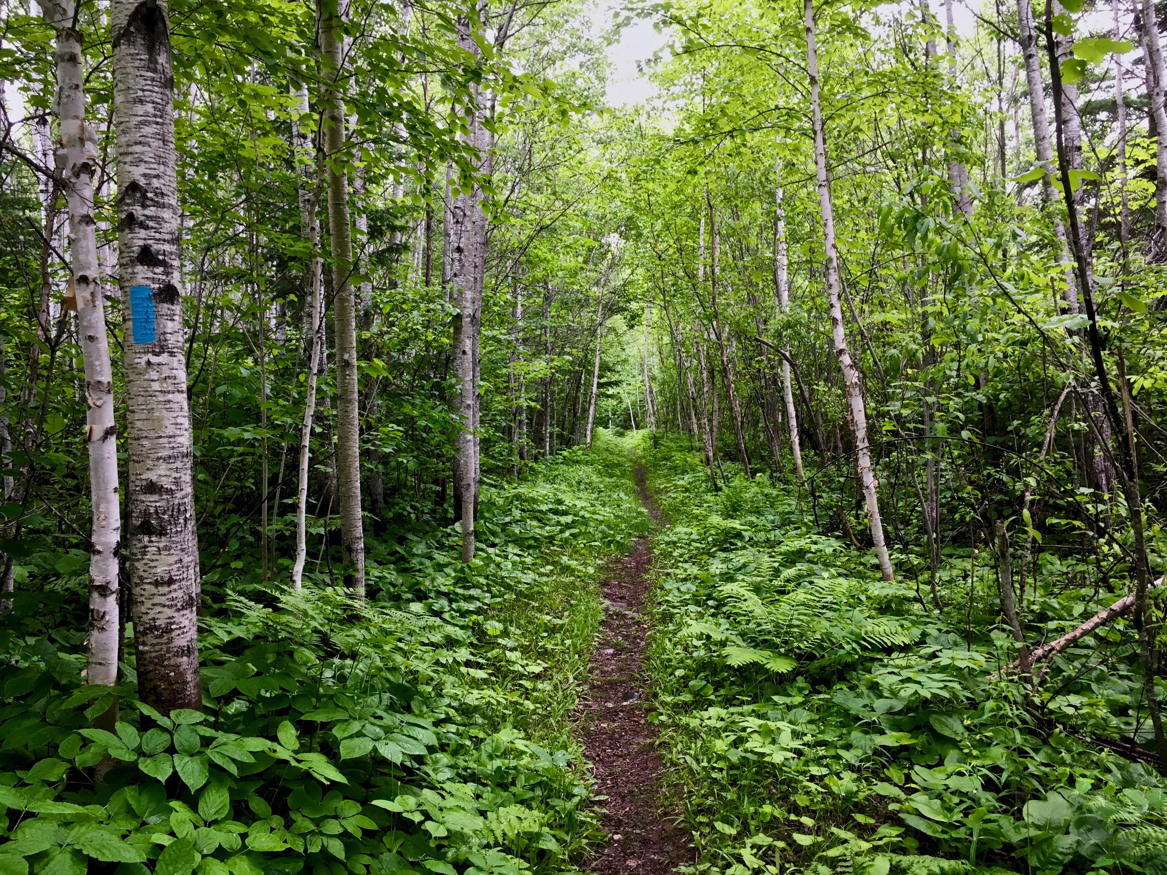 Superior Hiking Trail 34