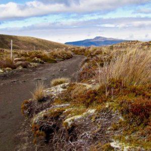Tongario Crossing 2