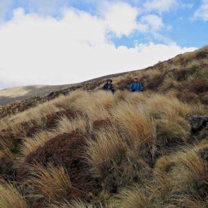 Tongario Crossing 27
