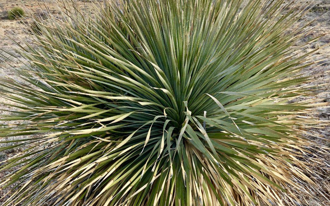 Arizona Trail Day 7: Sahuarita Road to Saguaro National Park