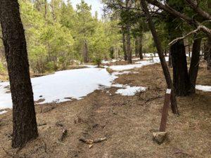 The Arizona Trail passes through some patchy snow on the Mogollon Rim.