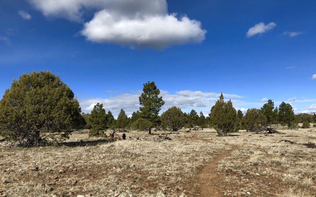 A Crazy Hike Along the Arizona Trail (AZT)
