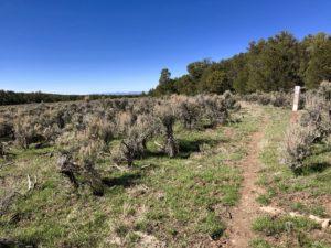Arizona Trail winding through scrubby cattle pasture.
