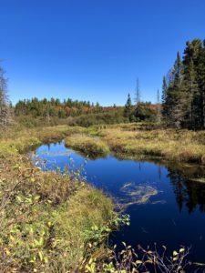 Deep blue river flowing through golden vegetation.