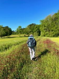Backpacker hiking through field of wildflowers.
