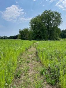 Hiking trail winding through short grasses.