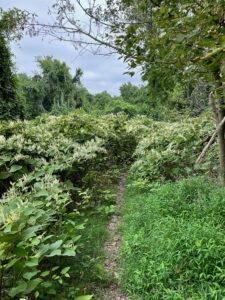 Overgrown single track hiking trail near Fort Bunker Hill.